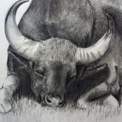 Der ruhige Schlaf eines träumerischen Stiers. Detail / The quiet Sleep of a dreamy Bull. Detail