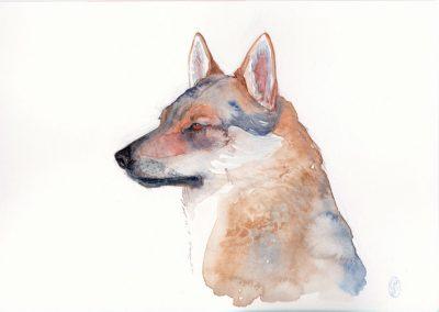 Retrato Lobo II / Portrait Wolf II 21x15cm