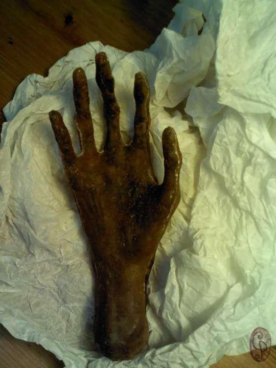 Mano momia / Mummy hand