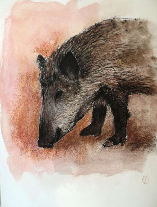 Jabalí buscando comida / Wild pig searching for food 30x40cm