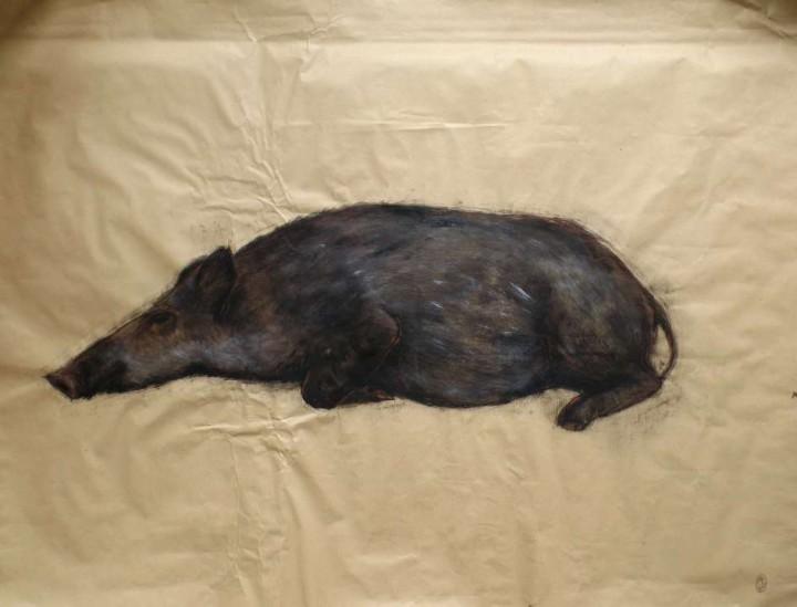 Jabalina durmiendo / Sleeping Wild sow 100x78cm