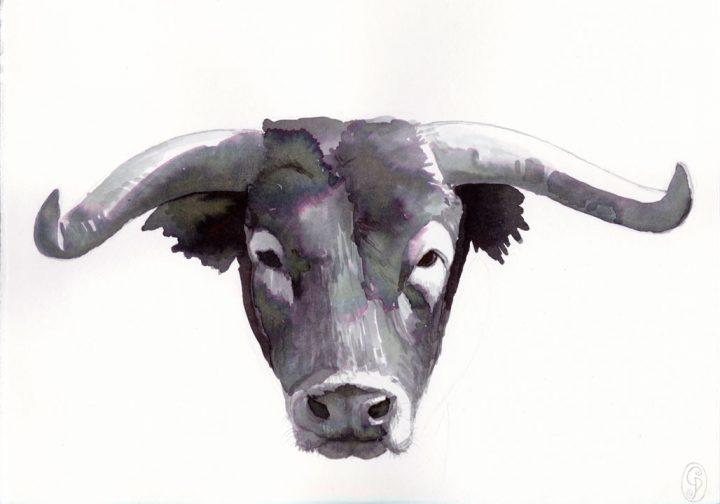 Retrato Toro II / Portrait Bull II 21X15cm