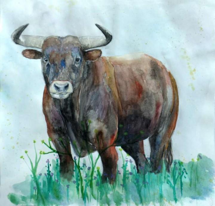 Toro / Bull 21x20cm