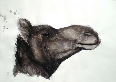 Cabeza Camello / Camel head 61x43cm